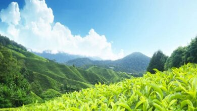 Top 5 Hill Stations In India You Much Travel As A Foreigner