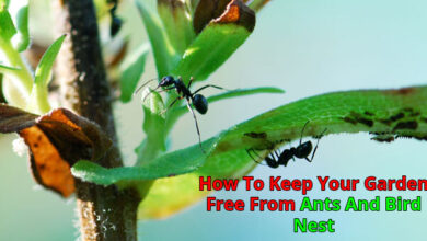 How To Keep Your Garden Free From Ants And Bird Nest