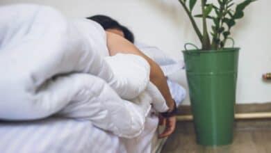 Help You 9 Indoor Plants That'll Sleep Better
